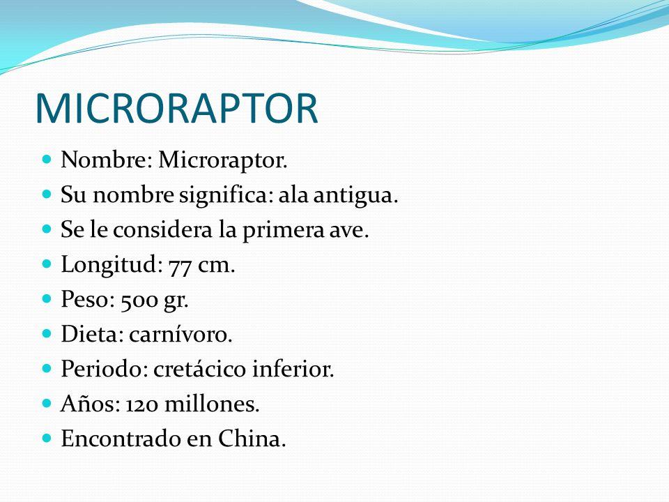 MICRORAPTOR Nombre: Microraptor. Su nombre significa: ala antigua. Se le considera la primera ave. Longitud: 77 cm. Peso: 500 gr. Dieta: carnívoro. Pe