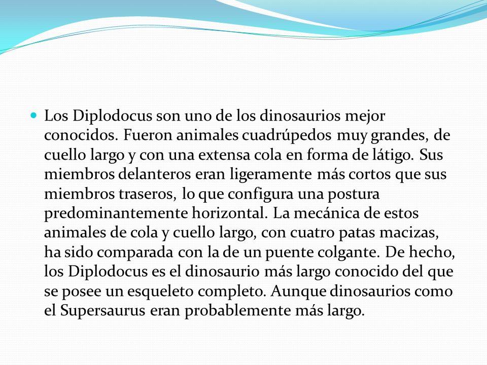 Los Diplodocus son uno de los dinosaurios mejor conocidos. Fueron animales cuadrúpedos muy grandes, de cuello largo y con una extensa cola en forma de