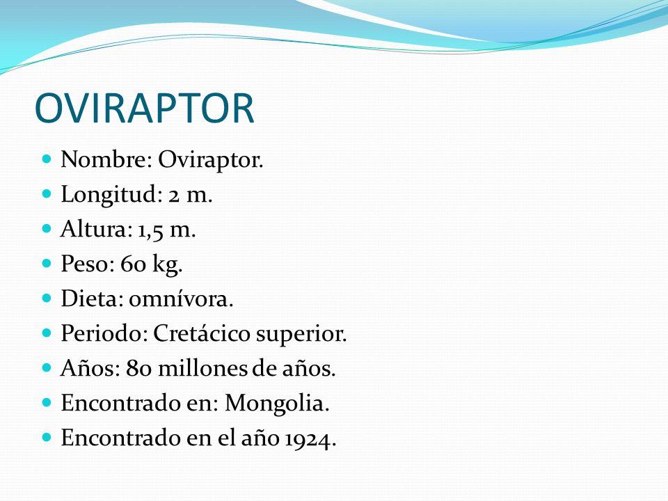 OVIRAPTOR Nombre: Oviraptor. Longitud: 2 m. Altura: 1,5 m. Peso: 60 kg. Dieta: omnívora. Periodo: Cretácico superior. Años: 80 millones de años. Encon