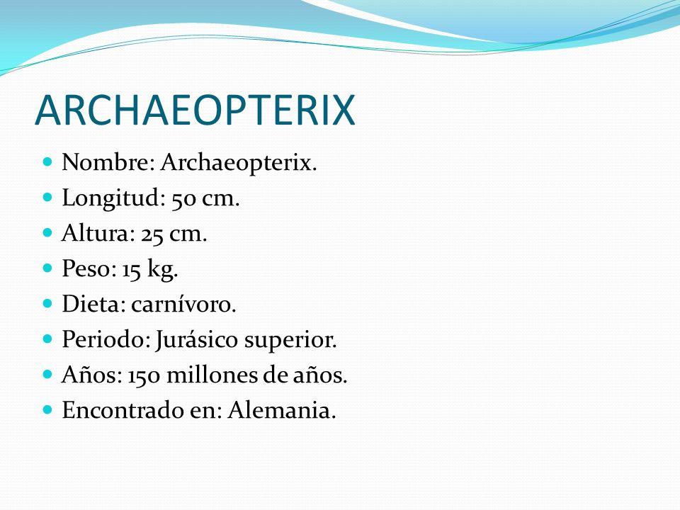 ARCHAEOPTERIX Nombre: Archaeopterix. Longitud: 50 cm. Altura: 25 cm. Peso: 15 kg. Dieta: carnívoro. Periodo: Jurásico superior. Años: 150 millones de