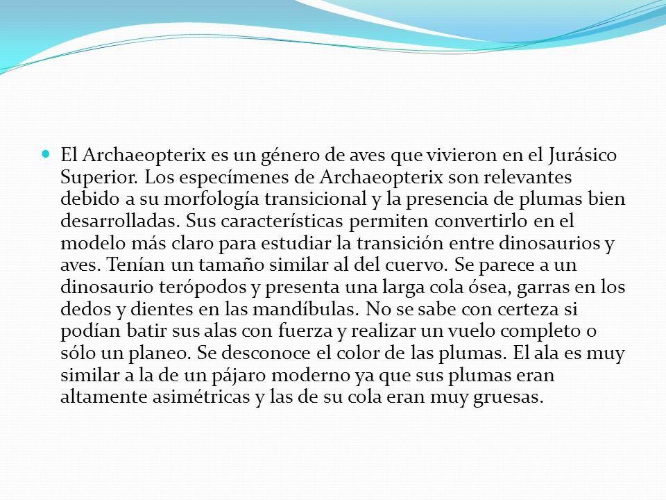 El Archaeopterix es un género de aves que vivieron en el Jurásico Superior. Los especímenes de Archaeopterix son relevantes debido a su morfología tra