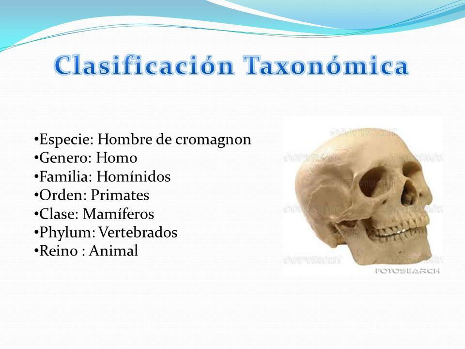 Especie: Hombre de cromagnon Genero: Homo Familia: Homínidos Orden: Primates Clase: Mamíferos Phylum: Vertebrados Reino : Animal