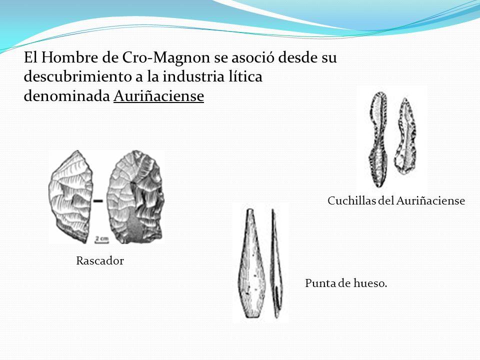 El Hombre de Cro-Magnon se asoció desde su descubrimiento a la industria lítica denominada Auriñaciense Rascador Cuchillas del Auriñaciense Punta de h