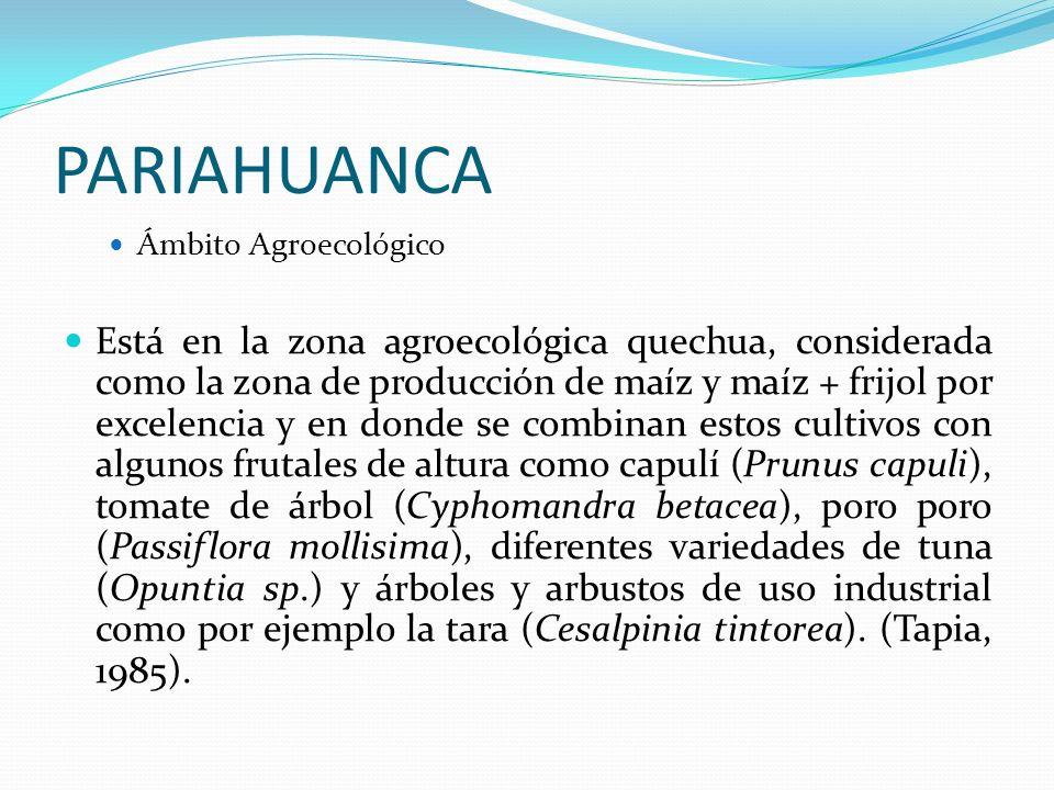 PARIAHUANCA Ámbito Agroecológico Está en la zona agroecológica quechua, considerada como la zona de producción de maíz y maíz + frijol por excelencia