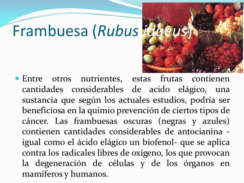 Frambuesa (Rubus idaeus) Entre otros nutrientes, estas frutas contienen cantidades considerables de acido elágico, una sustancia que según los actuale