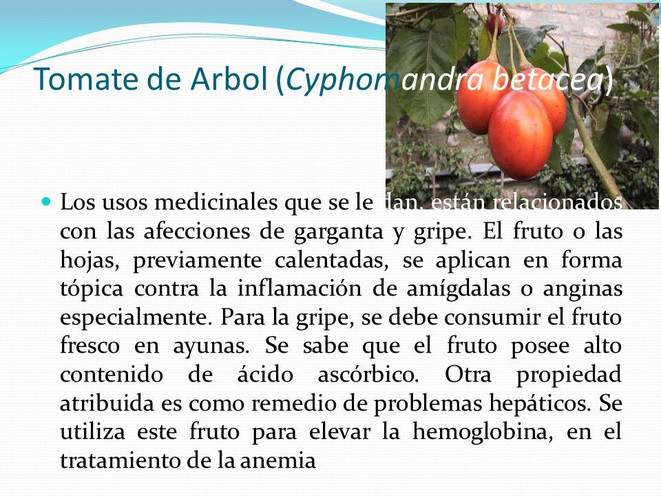 Tomate de Arbol (Cyphomandra betacea) Los usos medicinales que se le dan, están relacionados con las afecciones de garganta y gripe. El fruto o las ho