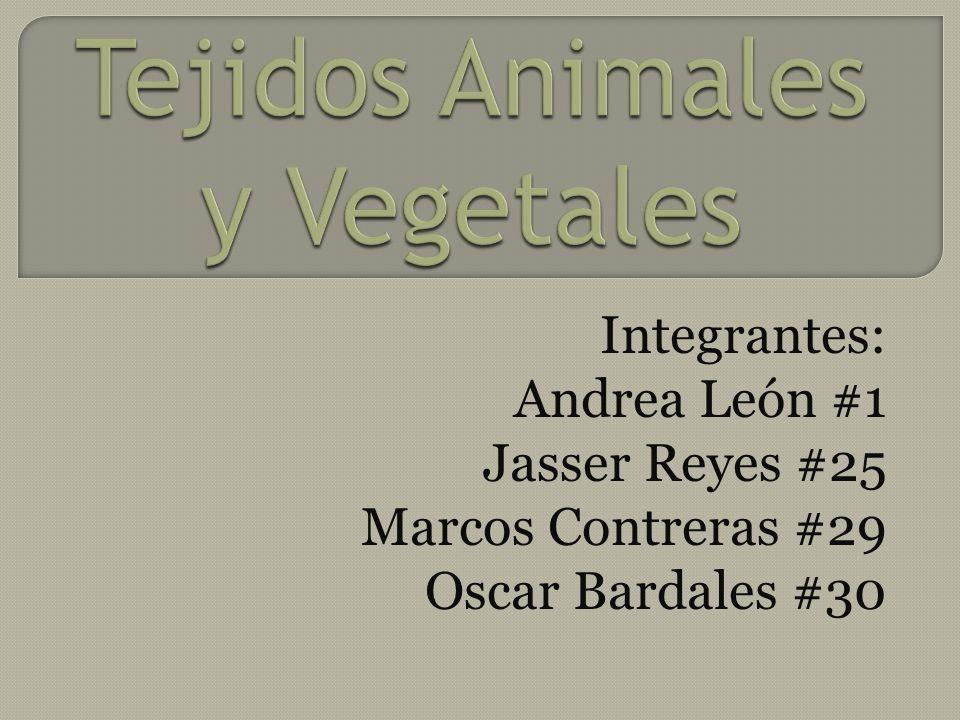 Integrantes: Andrea León #1 Jasser Reyes #25 Marcos Contreras #29 Oscar Bardales #30