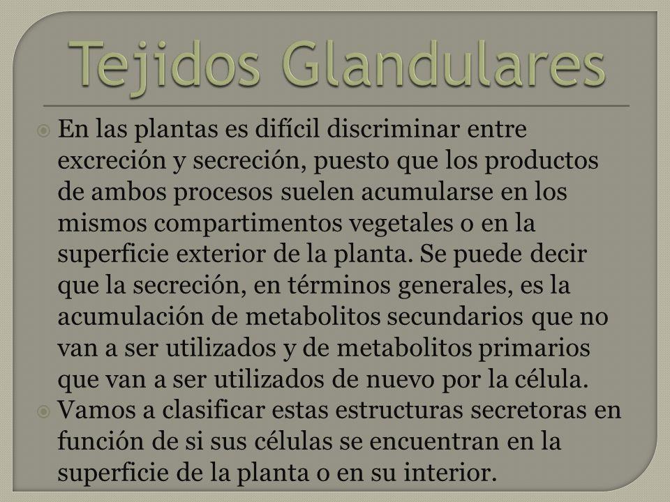 En las plantas es difícil discriminar entre excreción y secreción, puesto que los productos de ambos procesos suelen acumularse en los mismos comparti