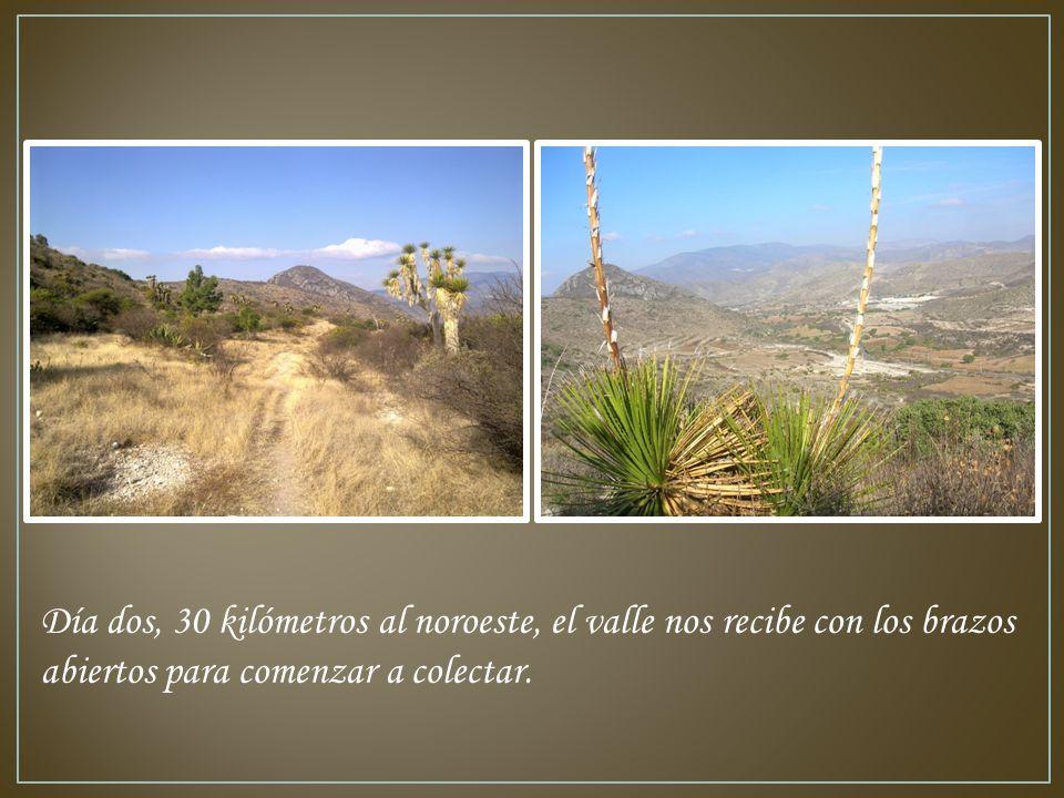Día dos, 30 kilómetros al noroeste, el valle nos recibe con los brazos abiertos para comenzar a colectar.