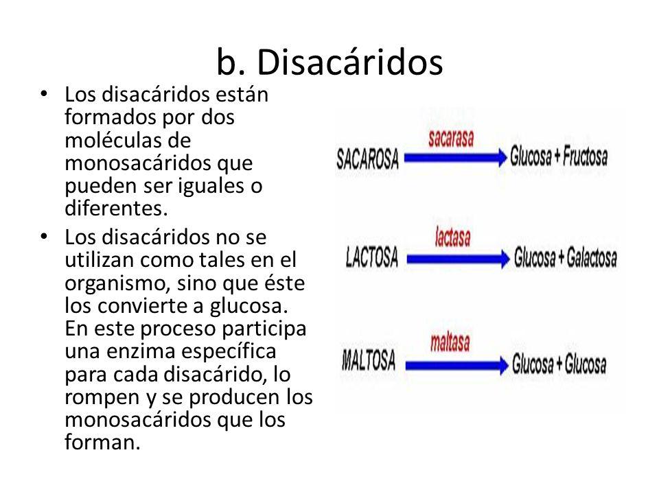 b. Disacáridos Los disacáridos están formados por dos moléculas de monosacáridos que pueden ser iguales o diferentes. Los disacáridos no se utilizan c