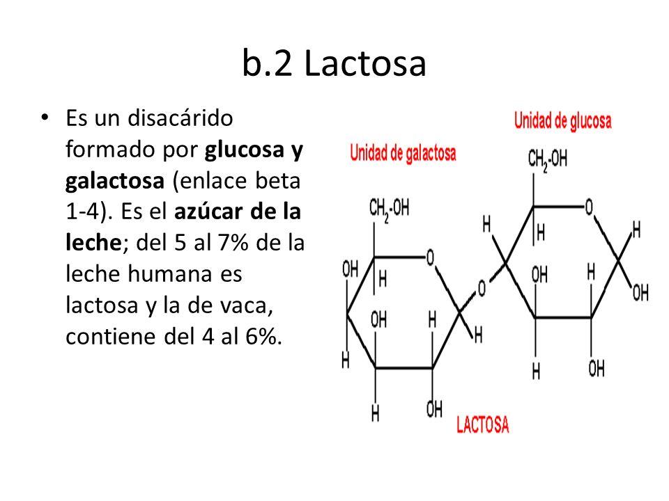b.2 Lactosa Es un disacárido formado por glucosa y galactosa (enlace beta 1-4). Es el azúcar de la leche; del 5 al 7% de la leche humana es lactosa y