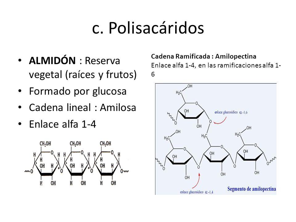 c. Polisacáridos ALMIDÓN : Reserva vegetal (raíces y frutos) Formado por glucosa Cadena lineal : Amilosa Enlace alfa 1-4 Cadena Ramificada : Amilopect