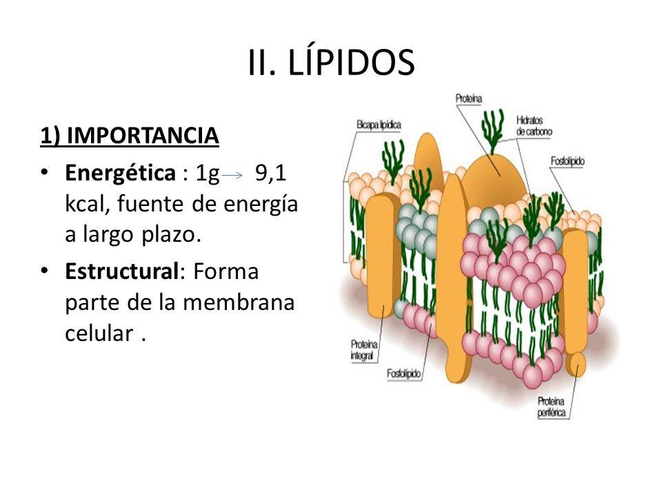 II. LÍPIDOS 1) IMPORTANCIA Energética : 1g 9,1 kcal, fuente de energía a largo plazo. Estructural: Forma parte de la membrana celular.