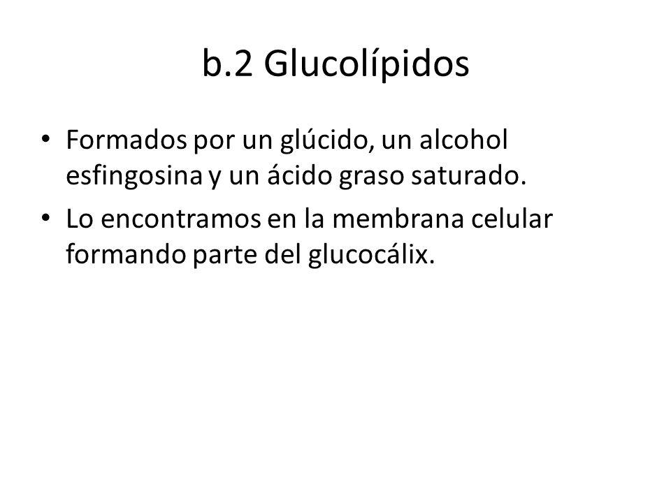 b.2 Glucolípidos Formados por un glúcido, un alcohol esfingosina y un ácido graso saturado. Lo encontramos en la membrana celular formando parte del g