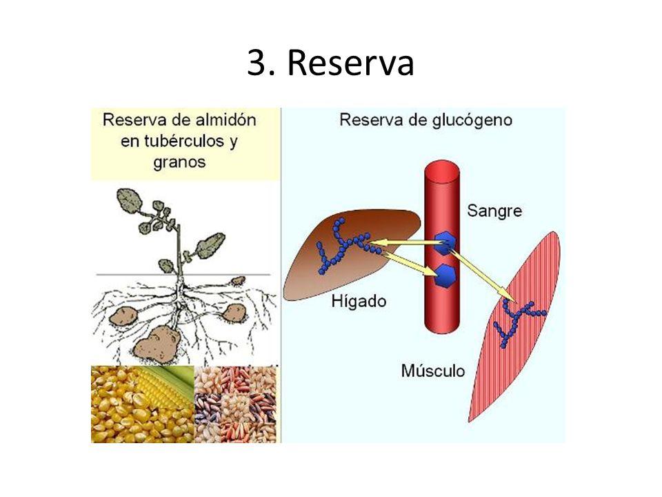 II.DEFINICIÓN Biomoléculas orgánicas formadas por C,H,O (ternarios) y/o N,S.