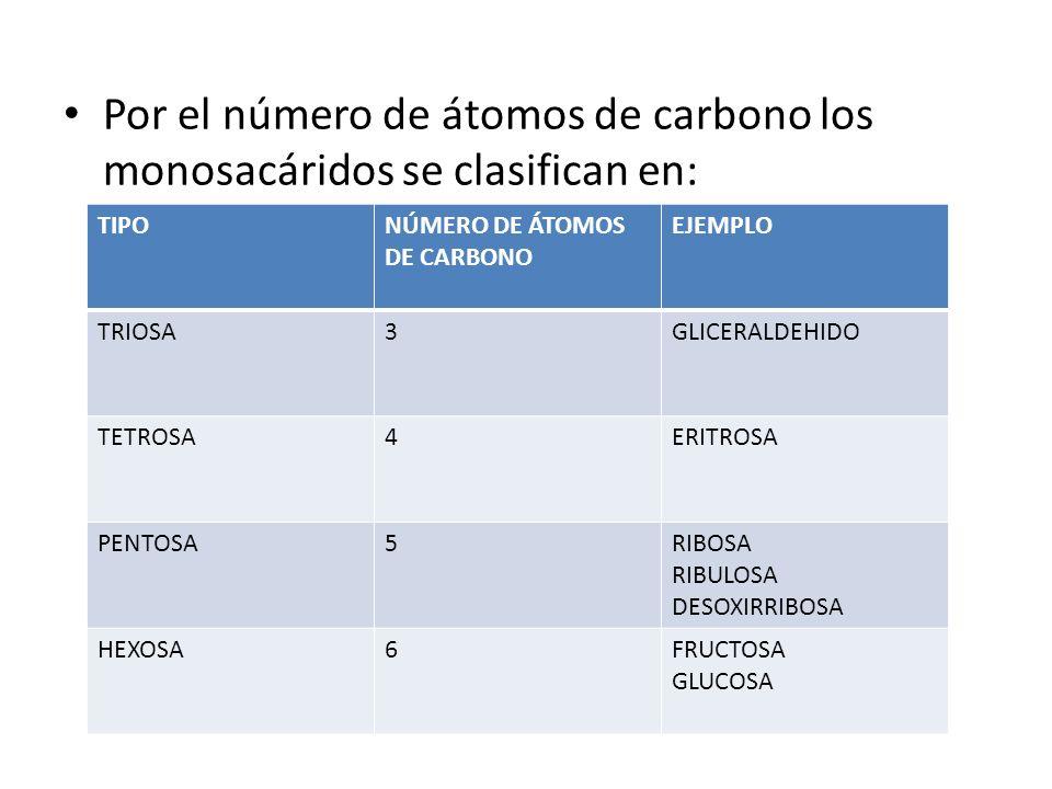 Por el número de átomos de carbono los monosacáridos se clasifican en: TIPONÚMERO DE ÁTOMOS DE CARBONO EJEMPLO TRIOSA3GLICERALDEHIDO TETROSA4ERITROSA