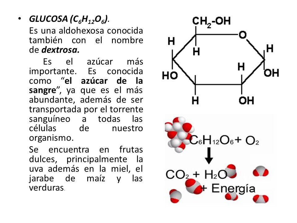 GLUCOSA (C 6 H 12 O 6 ). Es una aldohexosa conocida también con el nombre de dextrosa. Es el azúcar más importante. Es conocida como el azúcar de la s