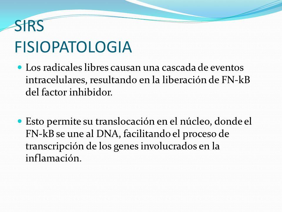 Los radicales libres causan una cascada de eventos intracelulares, resultando en la liberación de FN-kB del factor inhibidor. Esto permite su transloc