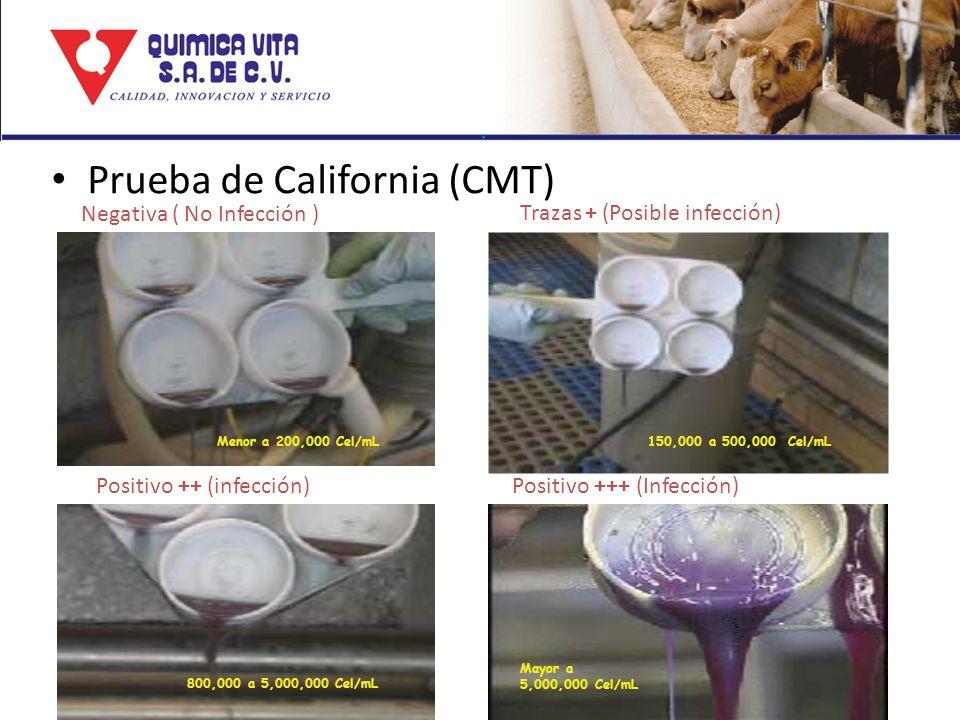 Prueba de California (CMT) Trazas + (Posible infección) Positivo ++ (infección)Positivo +++ (Infección) Menor a 200,000 Cel/mL150,000 a 500,000 Cel/mL