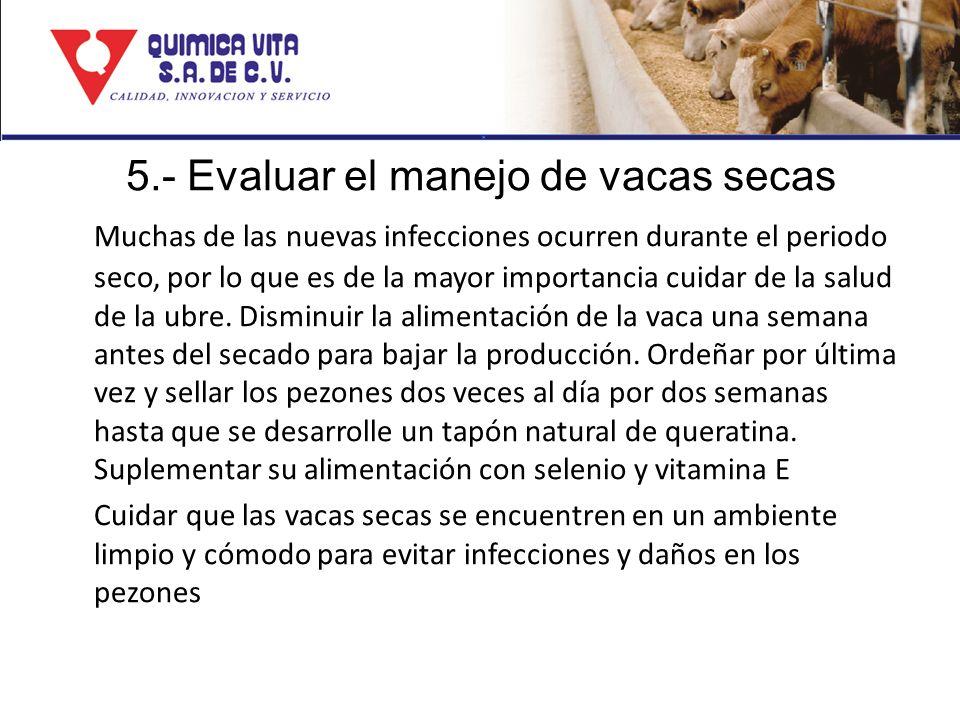 5.- Evaluar el manejo de vacas secas Muchas de las nuevas infecciones ocurren durante el periodo seco, por lo que es de la mayor importancia cuidar de