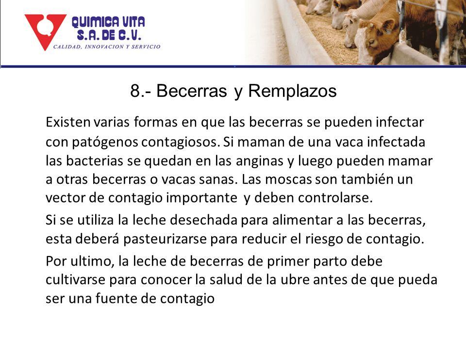 8.- Becerras y Remplazos Existen varias formas en que las becerras se pueden infectar con patógenos contagiosos. Si maman de una vaca infectada las ba