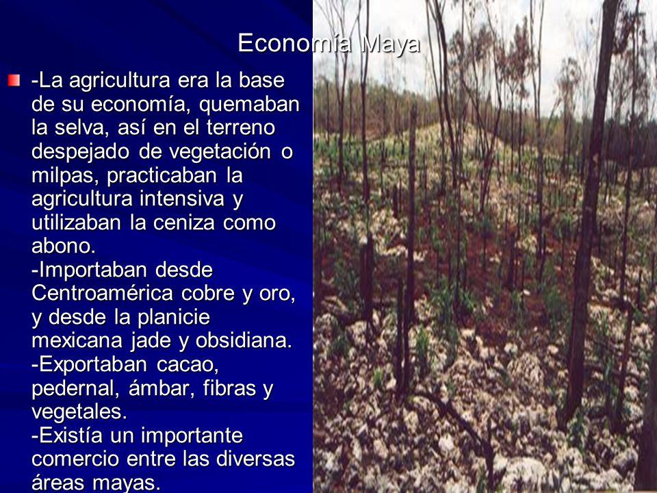 Economía Maya -La agricultura era la base de su economía, quemaban la selva, así en el terreno despejado de vegetación o milpas, practicaban la agricultura intensiva y utilizaban la ceniza como abono.
