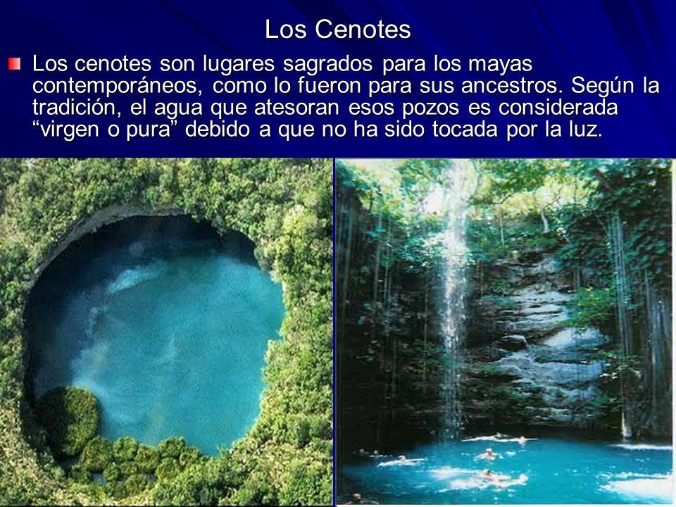 Los Cenotes Los cenotes son lugares sagrados para los mayas contemporáneos, como lo fueron para sus ancestros. Según la tradición, el agua que atesora