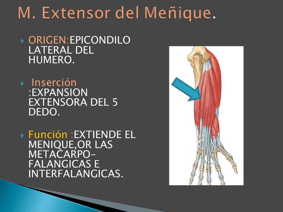 ORIGEN:EPICONDILO LATERAL DEL HUMERO. Inserción :EXPANSION EXTENSORA DEL 5 DEDO. Función :EXTIENDE EL MENIQUE,OR LAS METACARPO- FALANGICAS E INTERFALA