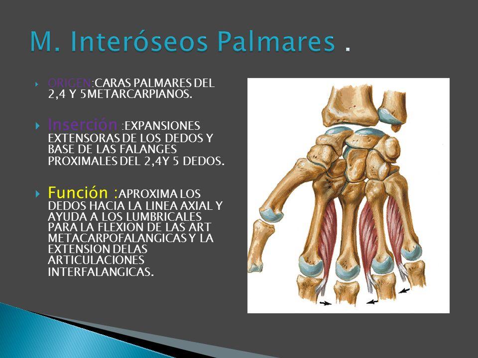 ORIGEN:CARAS PALMARES DEL 2,4 Y 5METARCARPIANOS.