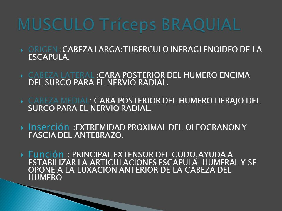 ORIGEN :CABEZA LARGA:TUBERCULO INFRAGLENOIDEO DE LA ESCAPULA.