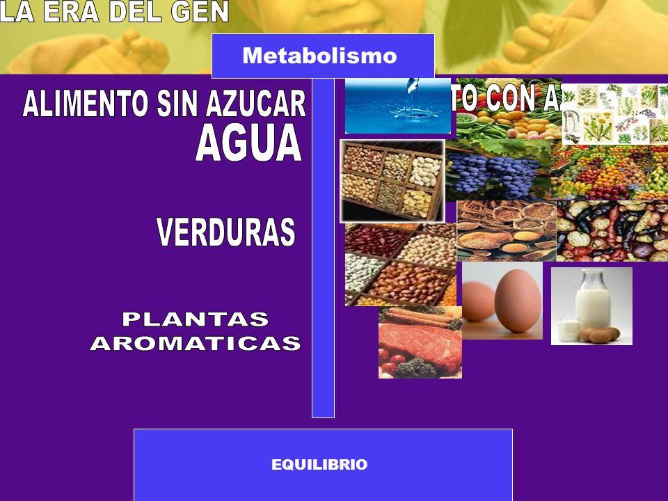 Metabolismo EQUILIBRIO