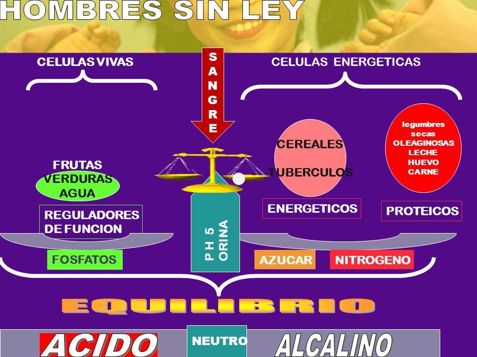 REGULADORES DE FUNCION FRUTAS VERDURAS AGUA CEREALES TUBERCULOS ENERGETICOS PROTEICOS CELULAS VIVASCELULAS ENERGETICAS FOSFATOS P H 5 ORINA NITROGENO