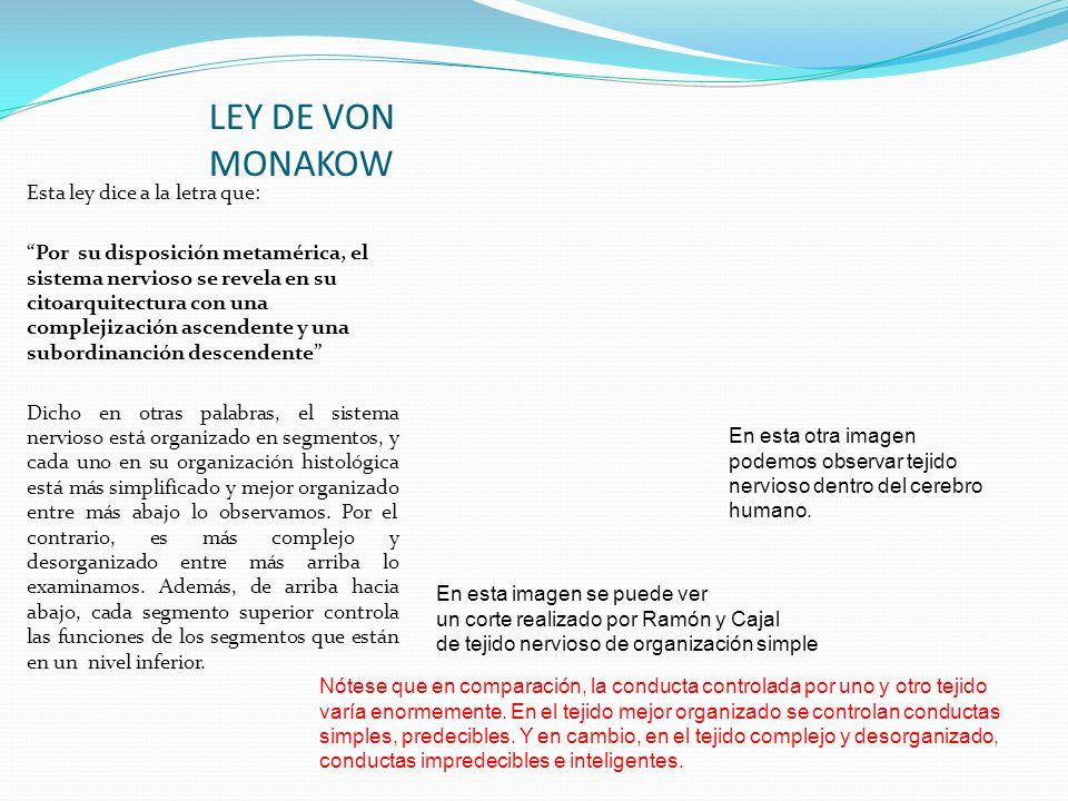 LEY DE VON MONAKOW Esta ley dice a la letra que: Por su disposición metamérica, el sistema nervioso se revela en su citoarquitectura con una complejiz