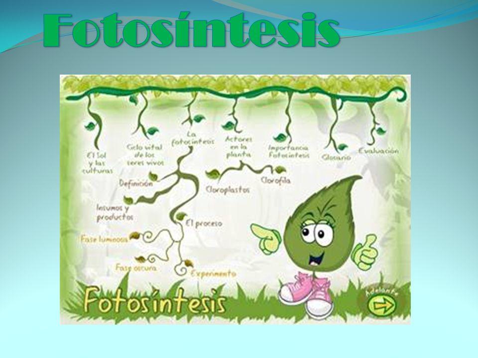 ¿Qué es la fotosíntesis.