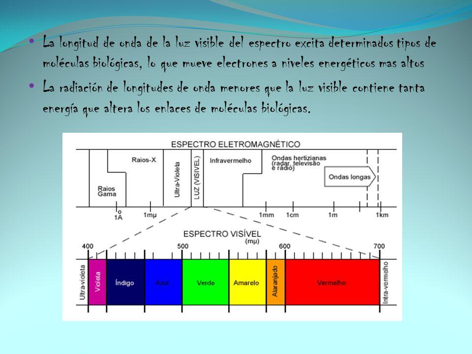 La longitud de onda de la luz visible del espectro excita determinados tipos de moléculas biológicas, lo que mueve electrones a niveles energéticos ma