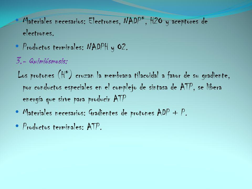 Materiales necesarios: Electrones, NADP*, H2O y aceptores de electrones. Productos terminales: NADPH y O2. 3.- Quimiósmosis: Los protones (H*) cruzan