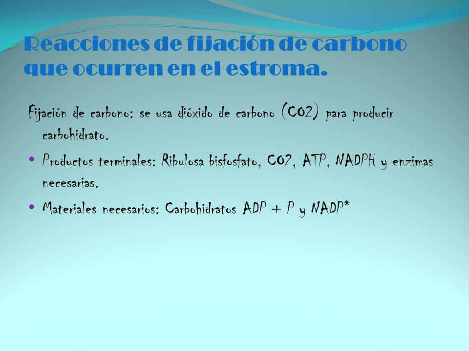 Reacciones de fijación de carbono que ocurren en el estroma. Fijación de carbono: se usa dióxido de carbono (CO2) para producir carbohidrato. Producto