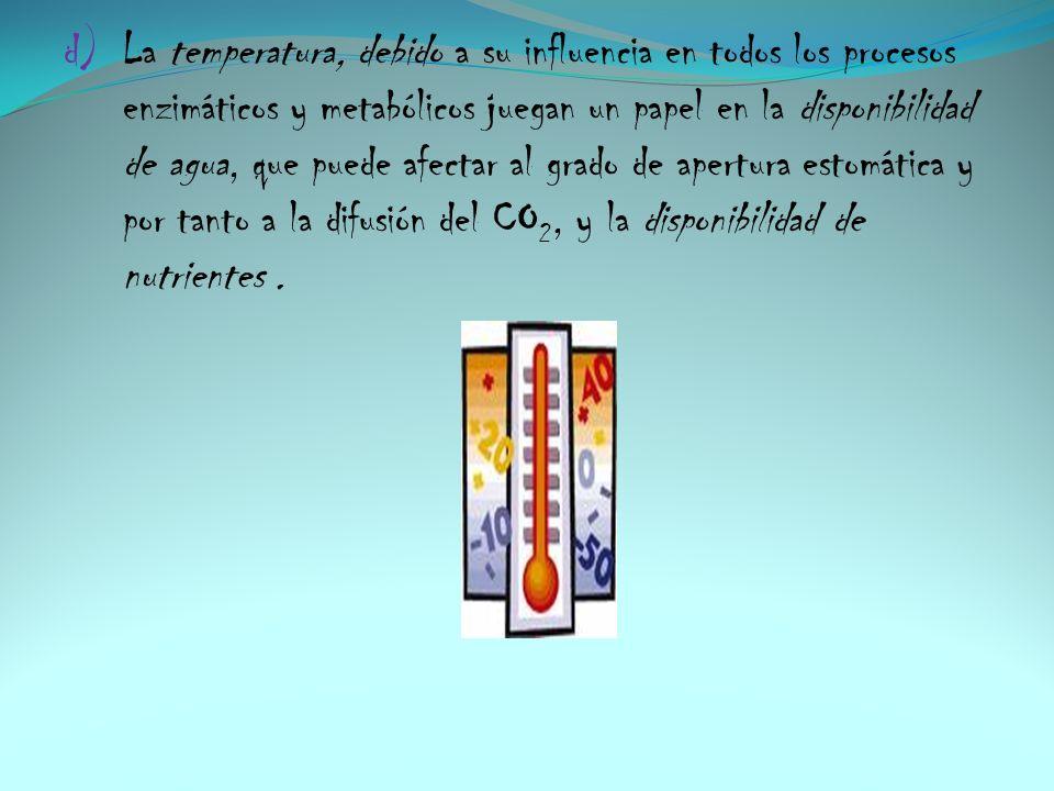 d) La temperatura, debido a su influencia en todos los procesos enzimáticos y metabólicos juegan un papel en la disponibilidad de agua, que puede afec