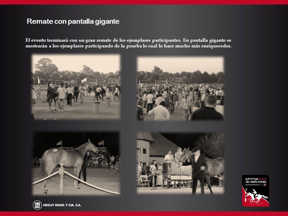 Agenda Domingo 9/12: Ingreso de animales.Presentación del torneo.