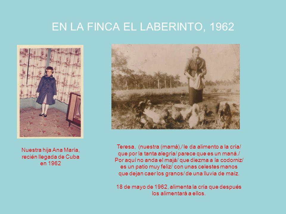 Los abuelos paternos con 11 hijos: 8 nacidos en Unión de Reyes y 3 en Gran Canaria Abuelos paternos Francisco Henríquez Miranda y María del Pilar Cáceres Vega.