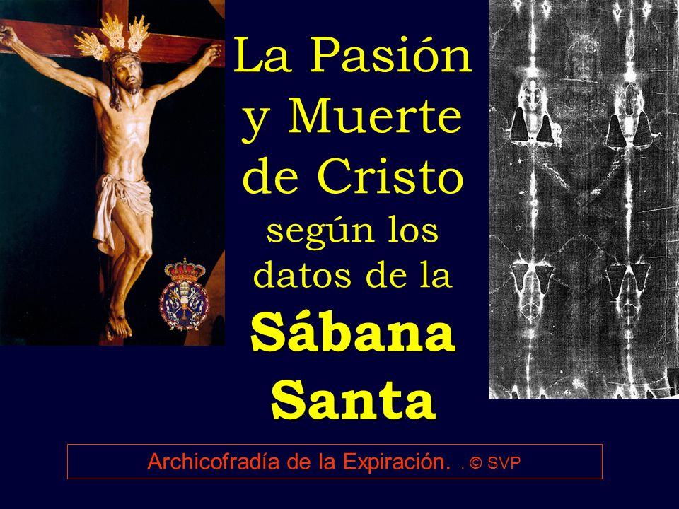 Sábana Santa La Pasión y Muerte de Cristo según los datos de la Sábana Santa Archicofradía de la Expiración.. © SVP