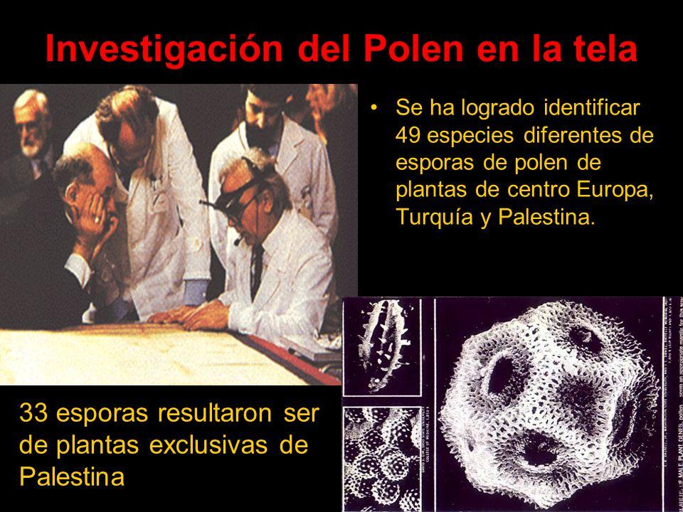 Investigación del Polen en la tela Se ha logrado identificar 49 especies diferentes de esporas de polen de plantas de centro Europa, Turquía y Palesti