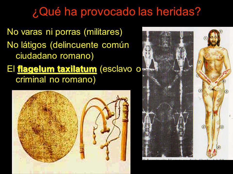 No varas ni porras (militares) No látigos (delincuente común ciudadano romano) flagelum taxilatum El flagelum taxilatum (esclavo o criminal no romano) ¿Qué ha provocado las heridas?