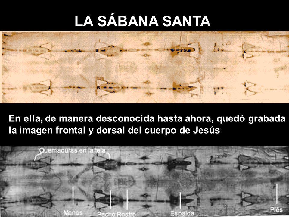 LA SÁBANA SANTA En ella, de manera desconocida hasta ahora, quedó grabada la imagen frontal y dorsal del cuerpo de Jesús
