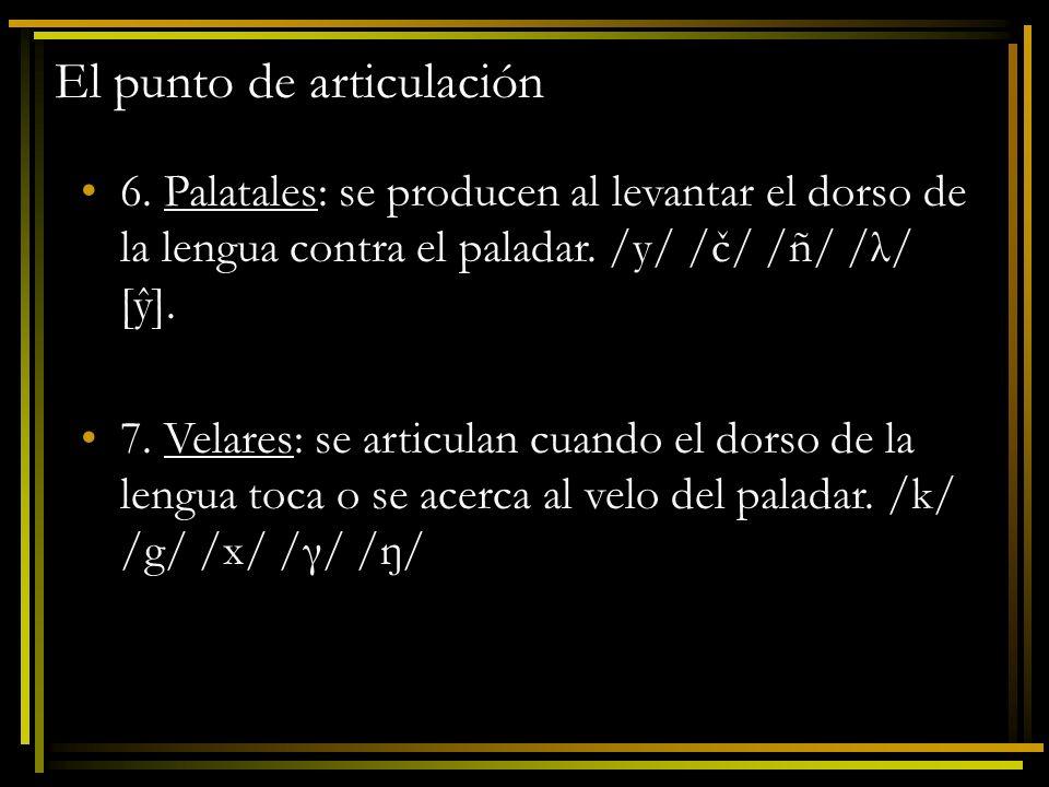 El punto de articulación 6. Palatales: se producen al levantar el dorso de la lengua contra el paladar. /y/ /č/ /ñ/ /λ/ [ŷ]. 7. Velares: se articulan