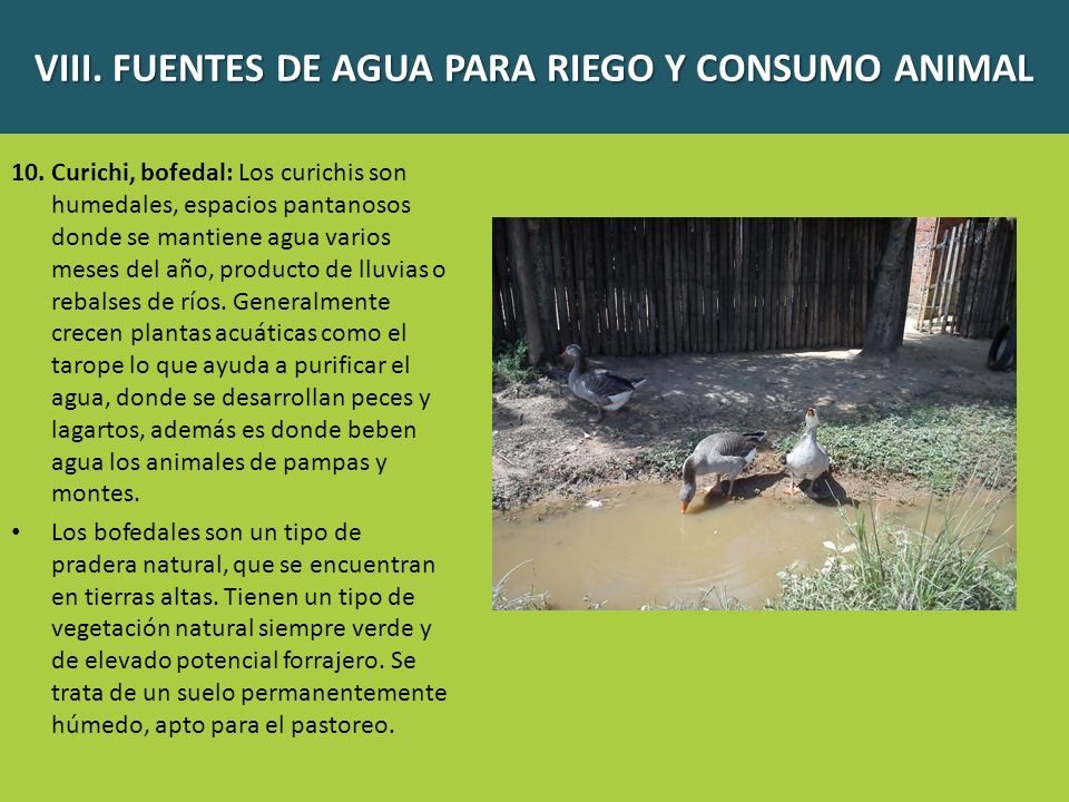 10. Curichi, bofedal: Los curichis son humedales, espacios pantanosos donde se mantiene agua varios meses del año, producto de lluvias o rebalses de r