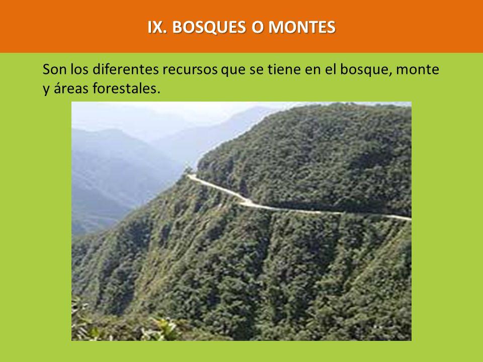 IX. BOSQUES O MONTES Son los diferentes recursos que se tiene en el bosque, monte y áreas forestales.
