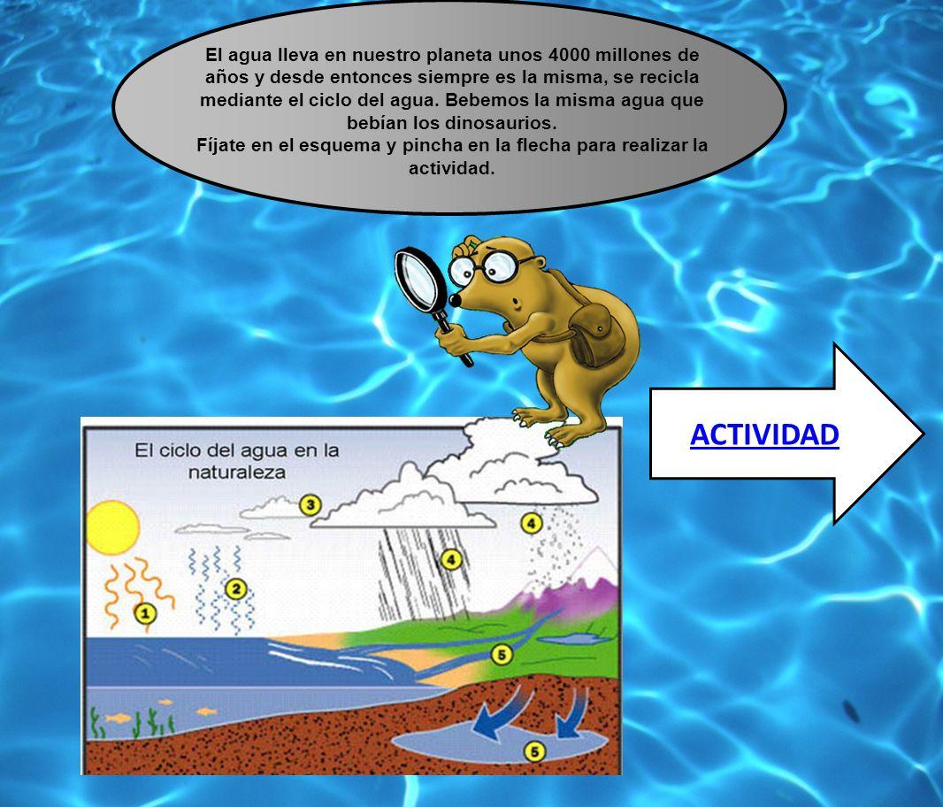 El agua lleva en nuestro planeta unos 4000 millones de años y desde entonces siempre es la misma, se recicla mediante el ciclo del agua. Bebemos la mi
