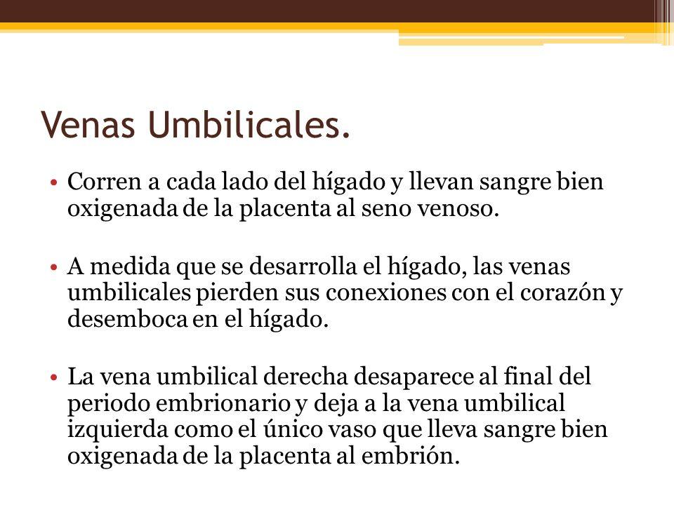 Venas Umbilicales.