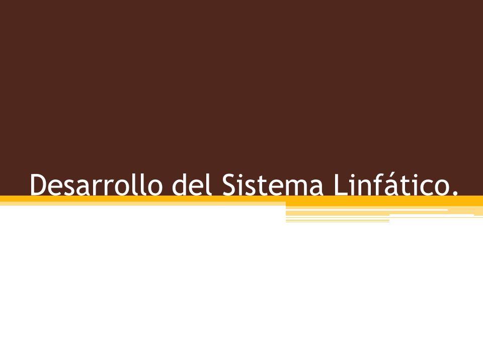 Desarrollo del Sistema Linfático.